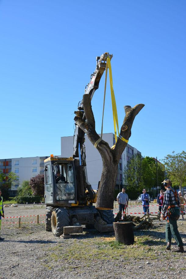 L'arbre du Bois fleuri / Blog Rive Droite